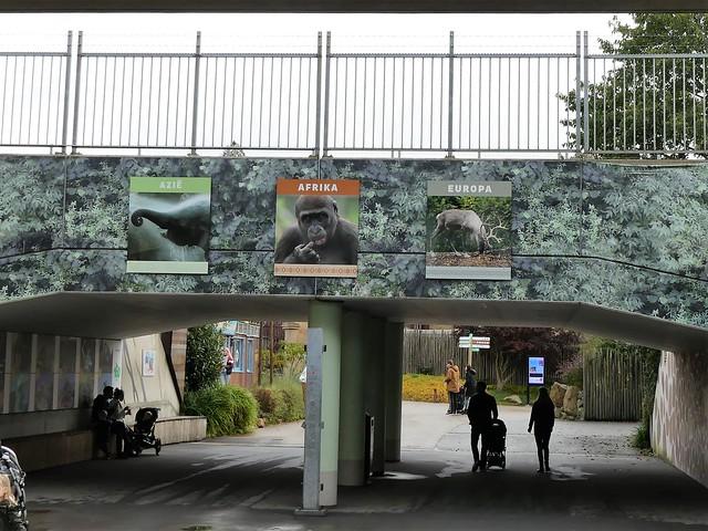 Diergaarde Blijdorp Rotterdam