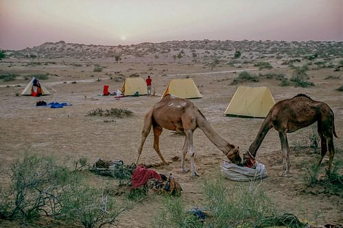 Rajasthan (3 of 46).jpg
