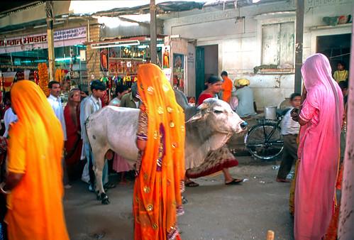 Rajasthan (27 of 46).jpg