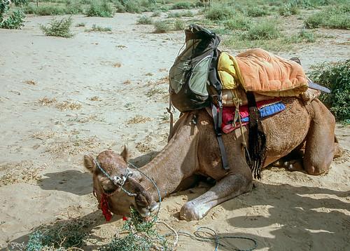 Rajasthan (6 of 46).jpg