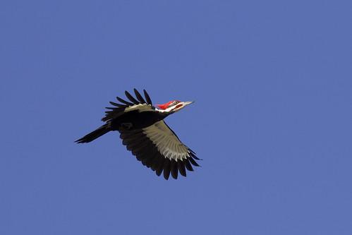 outdoo dennis adair nature wildlife 7dm2 7d ii ef100400mm canon florida
