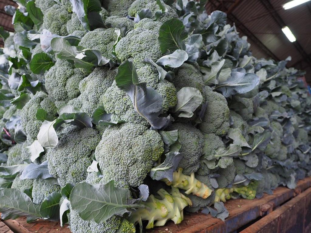 花椰菜 (4)