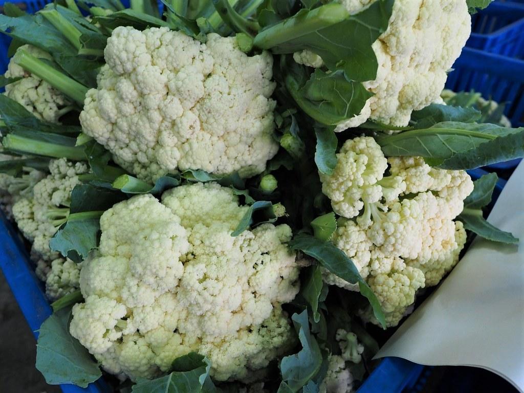 花椰菜 (9)