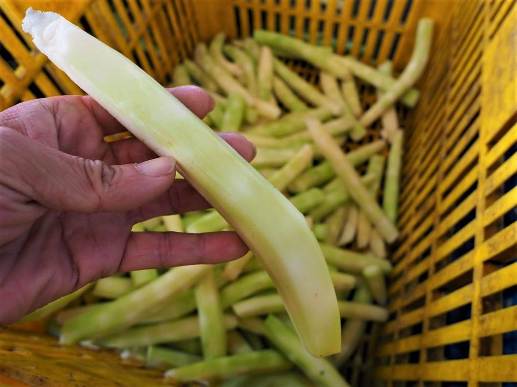 花椰菜 (8)