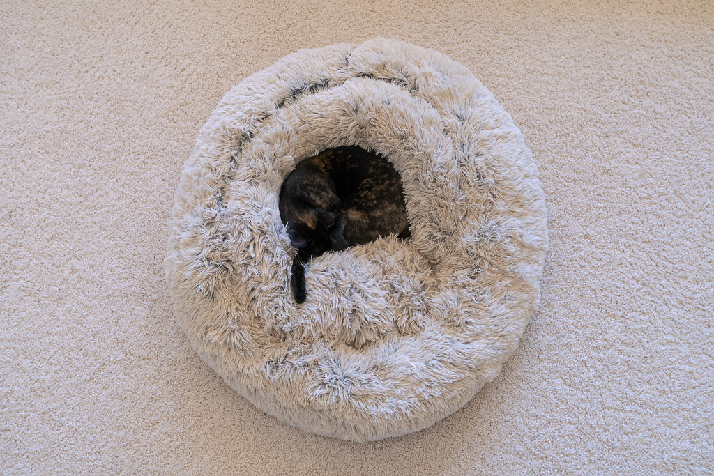 An overhead view of our cat Trixie sleeping in the middle of her plush cat bed on the carpet of our living room in December 2019