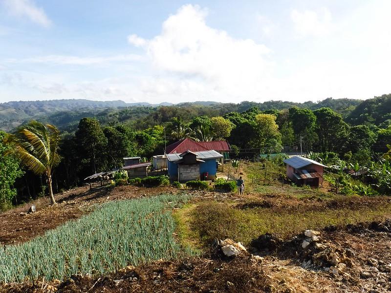 A small farm in Alcoy