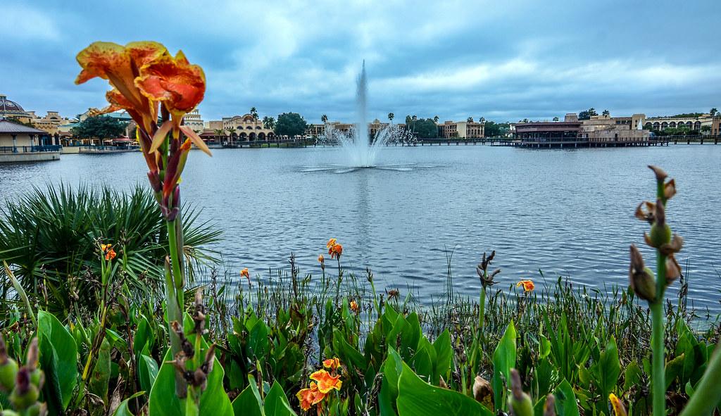 Coronado Springs flower water