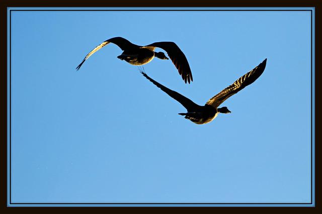 ~ ~ Twins in flight ~ ~