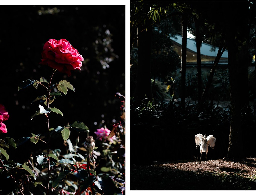 Sydney bothanic garden