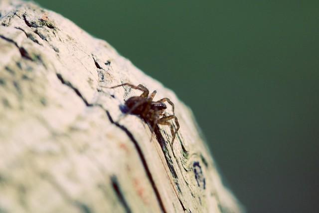 ......ich glaub ich Spinne ;-)
