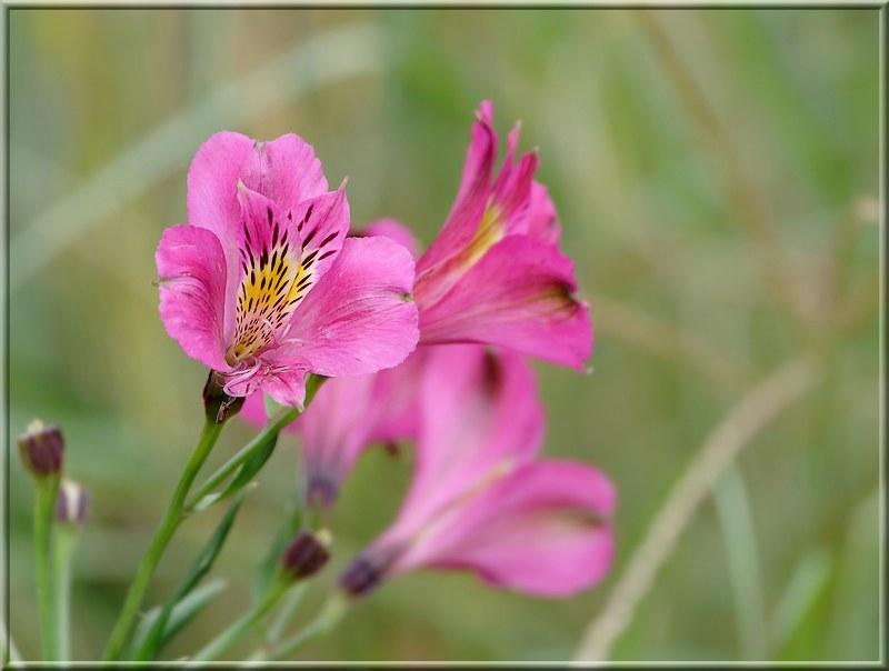 Fleurs en Bretagne. 49244192418_68a9597bd8_c