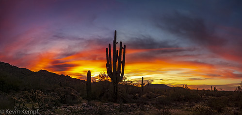 mcdowellsonoranpreserve scottsdale arizona sunrise mountain saguaro cactus goldenhour