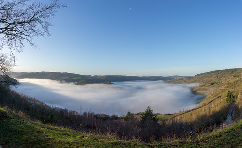 Fog on the Moselle river