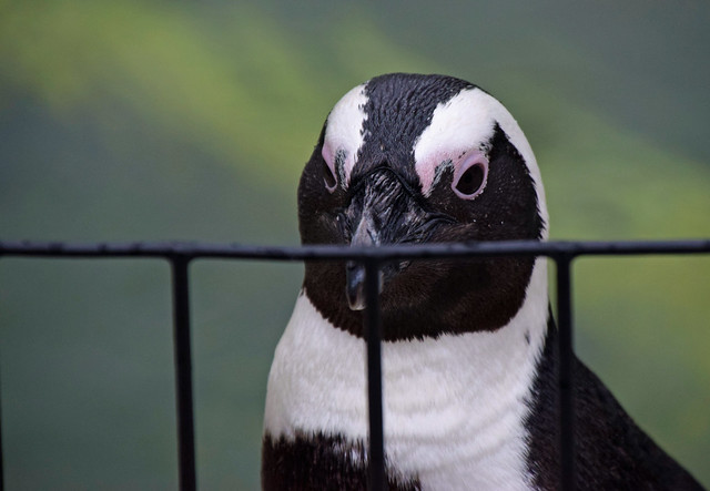 Penguin Greeter