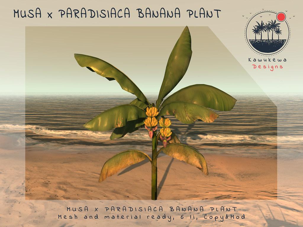 [Kawukewa Designs] Musa x Paradisiaca Banana Plant
