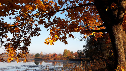 lake autumn yellow landscape nature