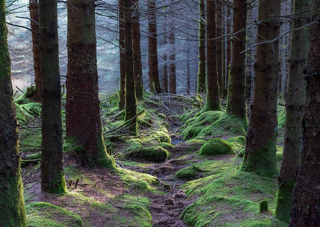 Path leading down through trees and moss into the forest depths.