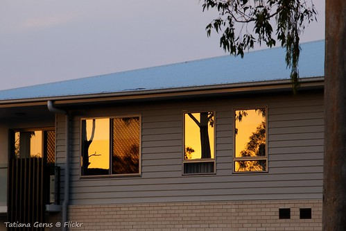 australia brisbane sunset building windows reflection roof tree glass