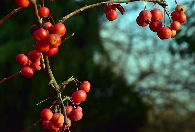 December at the Arboretum