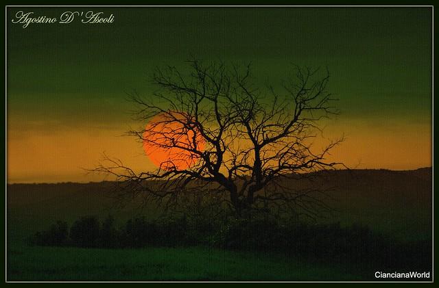 Tra i rami spogli di un albero di mandorlo - 20-Dicembre-2019