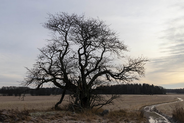That Old Tree