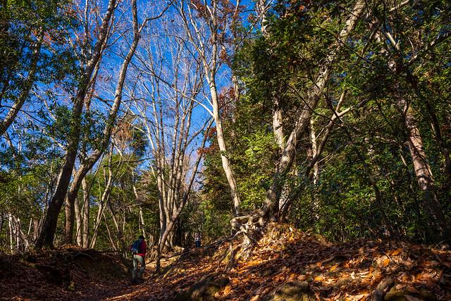 稲荷山コースを緩やかに進む