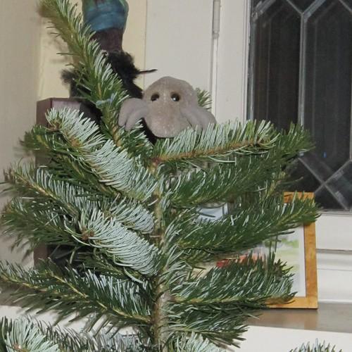 Tree Mite