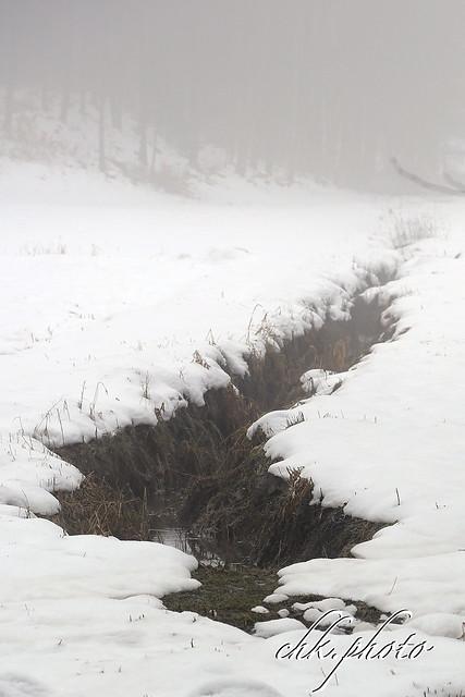 Fogy winter landscape