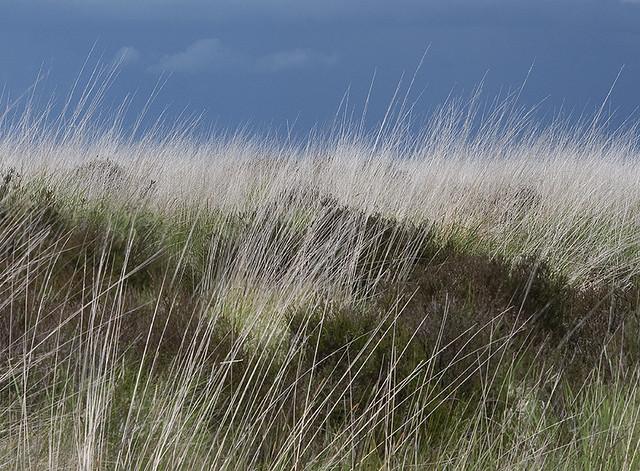 Winter grass, Dartmoor