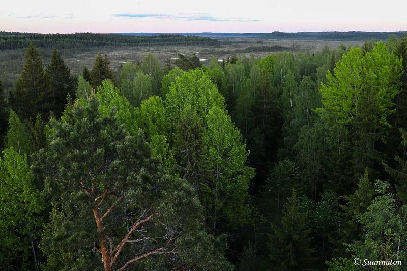 Torronsuon kansallispuisto, maisema näkötornista
