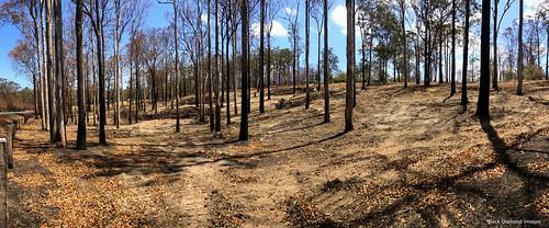 landclearing hillvillefire lakesway rainbowflat midnorthcoast nsw australia iphonexbackcamera iphonex iphone shotoniphone panorama iphonexpanorama appleiphonexpanorama appleiphonepanorama iphonepanorama greatlakesnsw barringtoncoast oldsoldiersroad nswbushfires2019 2019nswbushfires australianbushfire australianbushfires australianbushfires2019