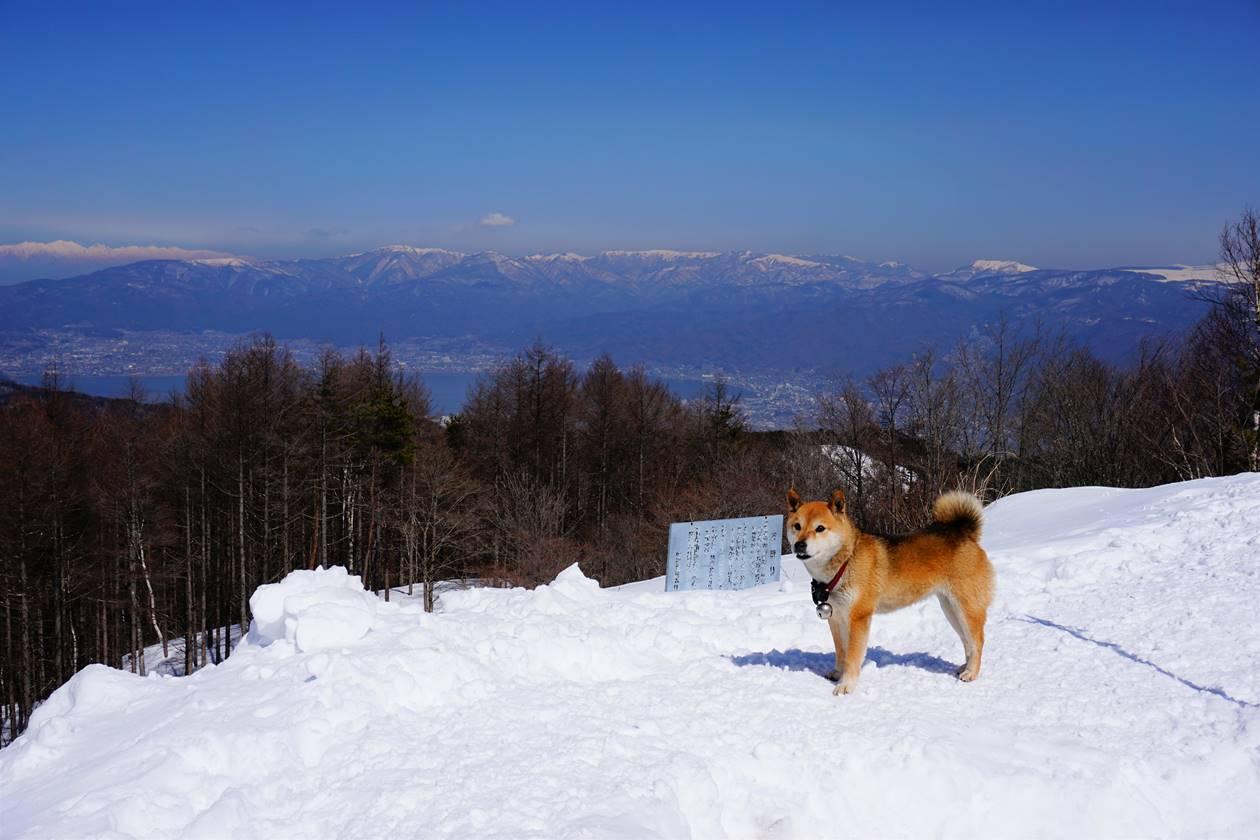 雪山と柴犬