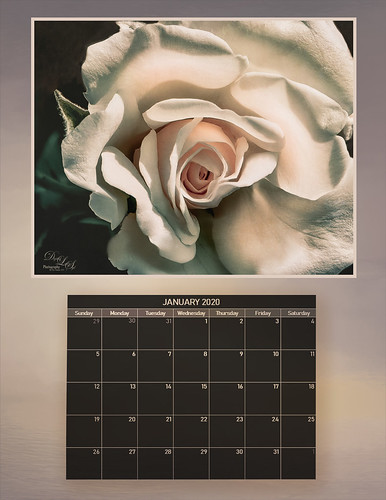 Calender image of a white rose