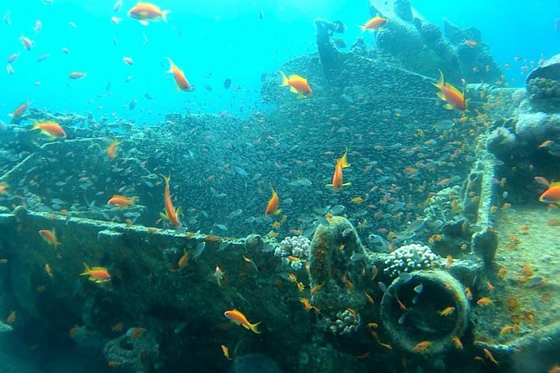 Aqaba, tankki ja kalat