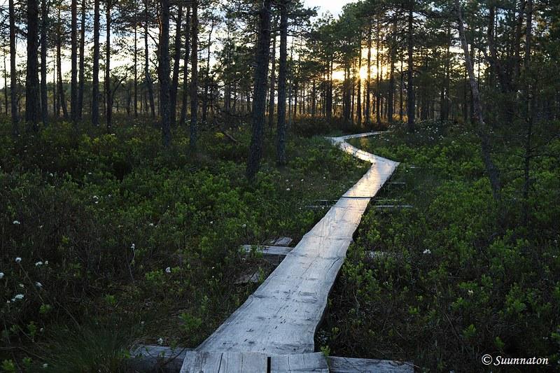 Torronsuon kansallispuisto, pitkospuut metsässä