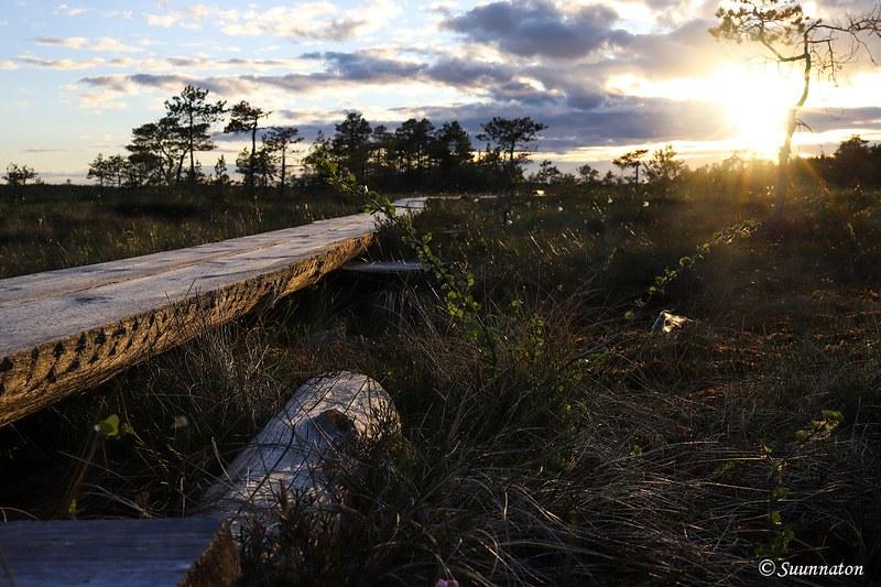 Torronsuon kansallispuisto, auringonlasku