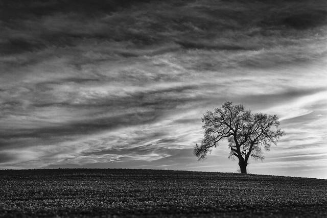 arbre-solitaire2