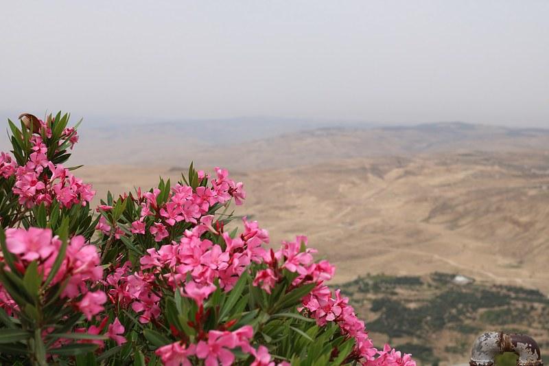 MtNebo, kukat ja maisema