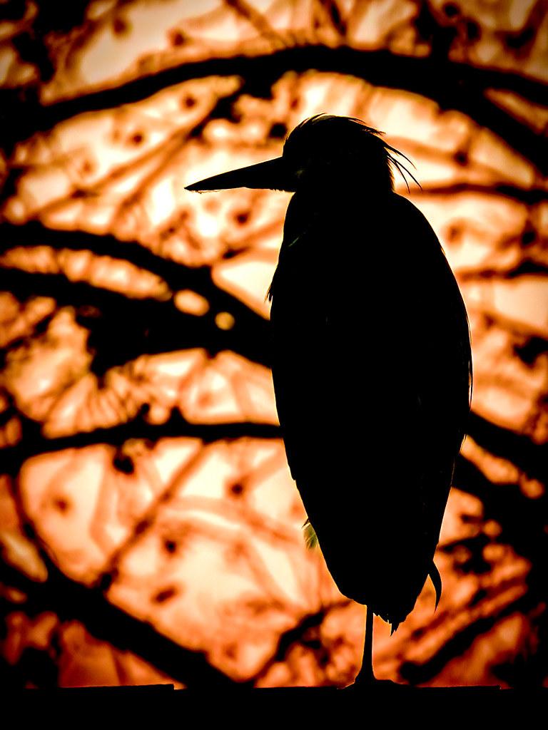 Silhouette dans le soir... 49252968877_b81cef2b54_b