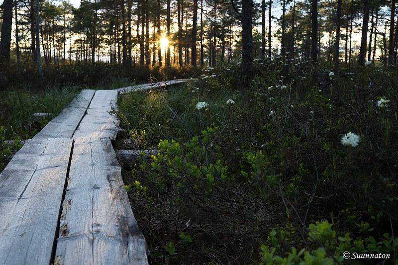 Torronsuon kansallispuisto, pitkospuut ja suopursu