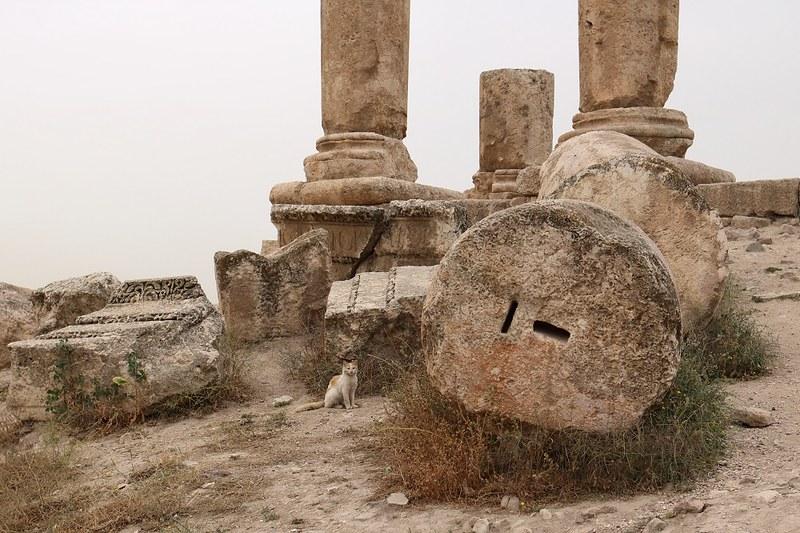 Amman, Temple of Hercules, kissa