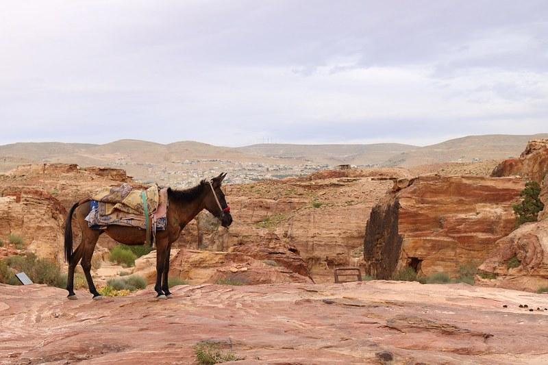 Aasi huipulla, Petra