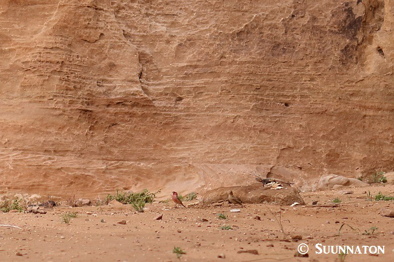 Wadi Rum, liskot, linnut