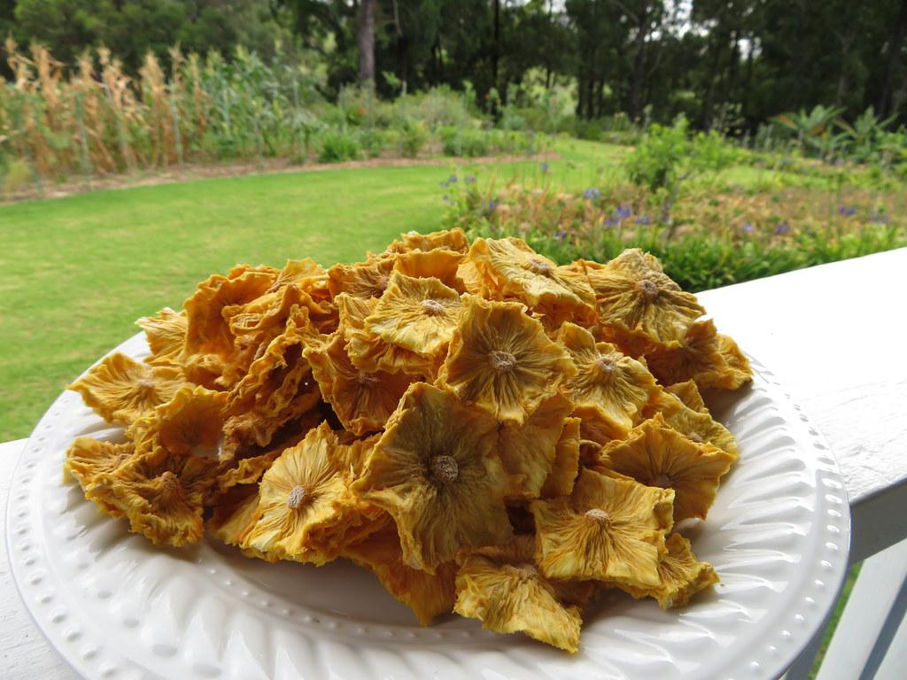 starr-190828-6875-Ananas_comosus-dried_fruit-Hawea_Pl_Olinda-Maui