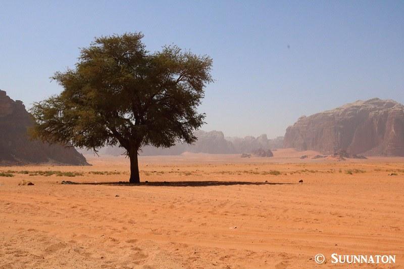 Wadi Rum, Lawrence Spring