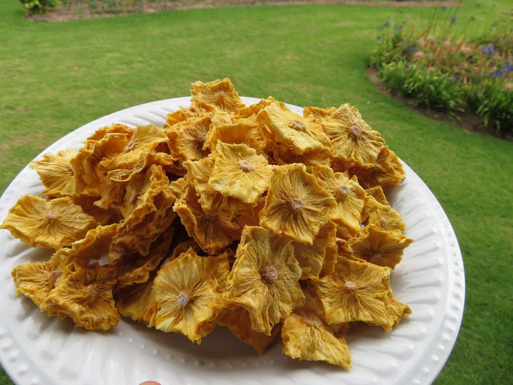 starr-190828-6874-Ananas_comosus-dried_fruit-Hawea_Pl_Olinda-Maui
