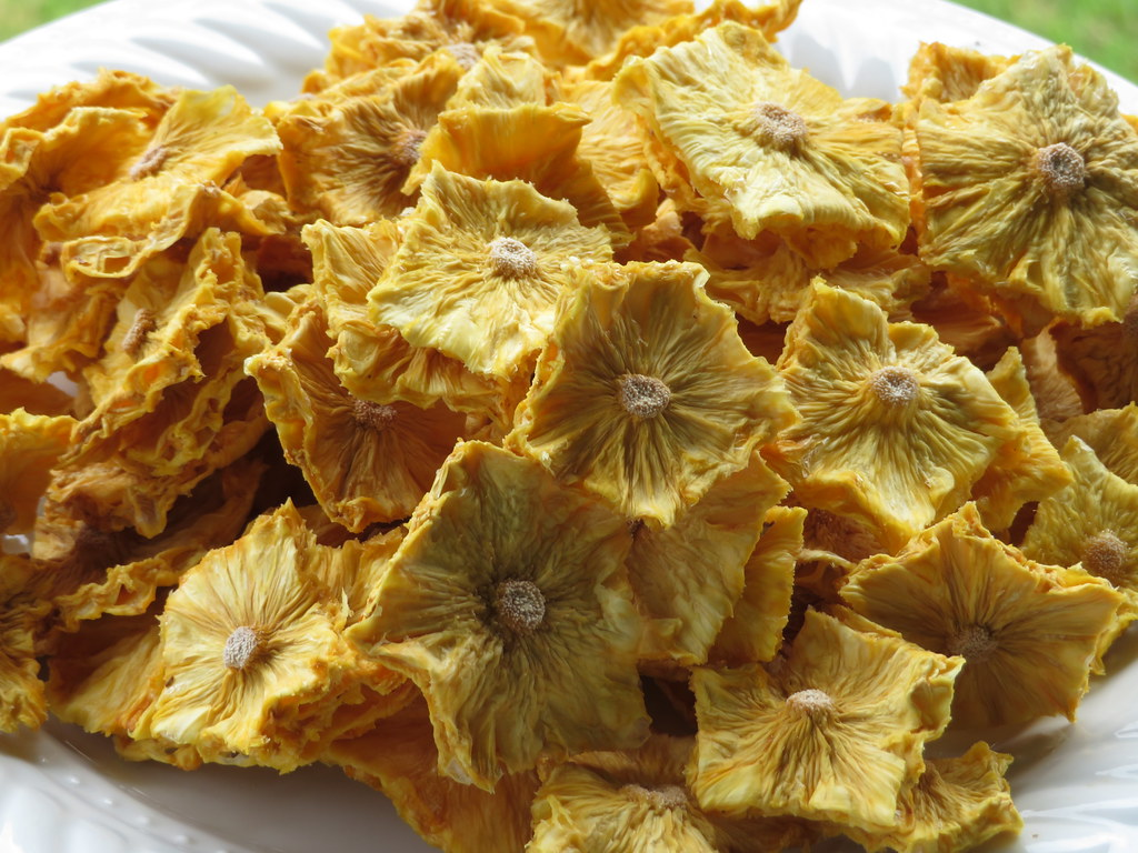starr-190828-6876-Ananas_comosus-dried_fruit-Hawea_Pl_Olinda-Maui
