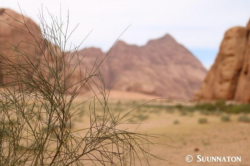 Wadi Rum, lounaan maisema