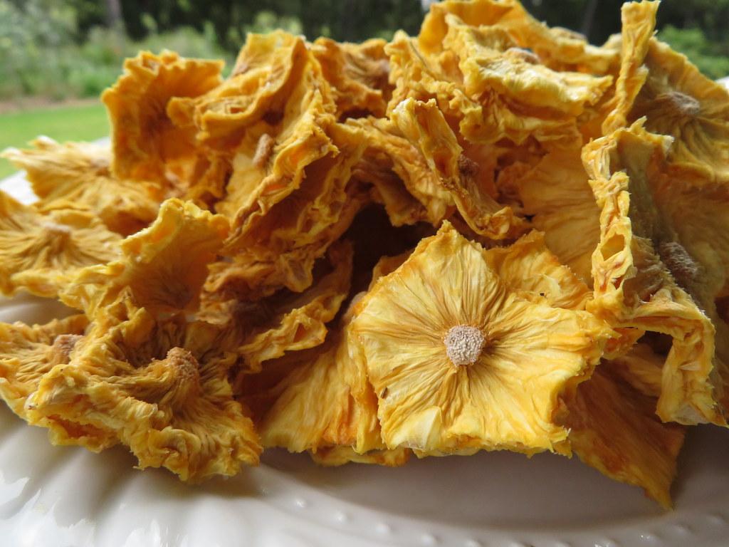 starr-190828-6878-Ananas_comosus-dried_fruit-Hawea_Pl_Olinda-Maui