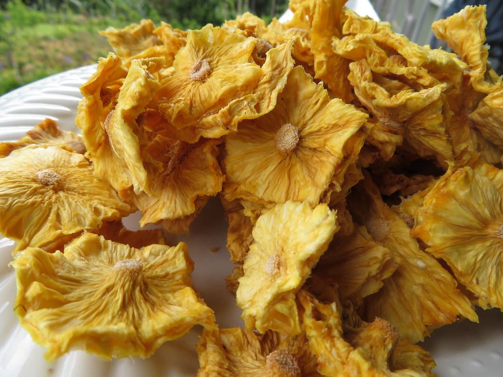 starr-190828-6879-Ananas_comosus-dried_fruit-Hawea_Pl_Olinda-Maui